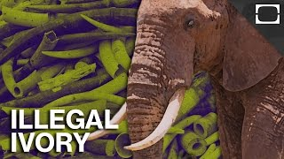 The U.S. Crushes A Ton of Illegal Ivory thumbnail