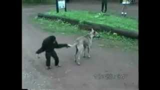 Cheeky monkey making fun of dog - Funny