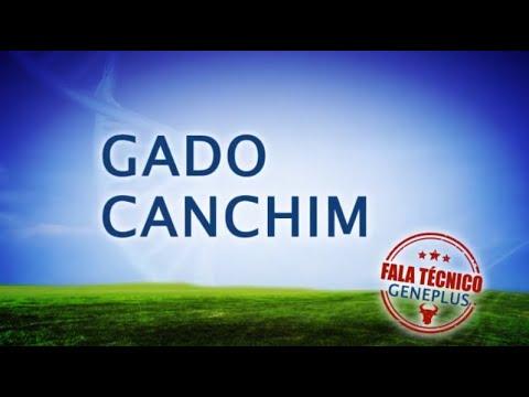 Fala Técnico GADO Canchim