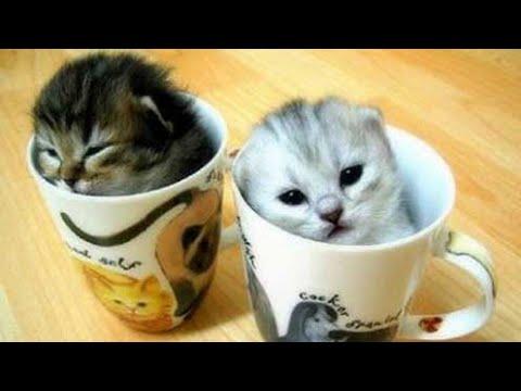 Video Cats Amino