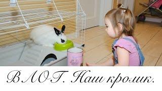 ВЛОГ. Где наш кролик?Готовлю штрудель. Алинины словечки :)