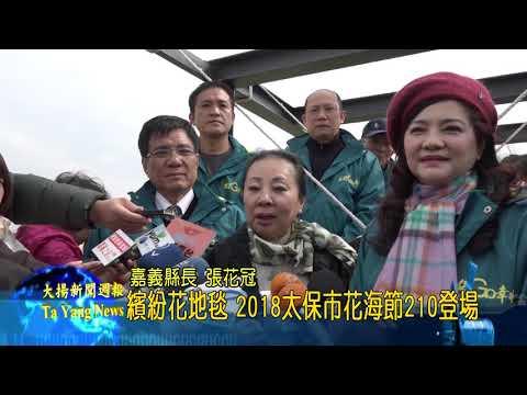大揚新聞 繽紛花地毯 2018太保市花海節2/10登場