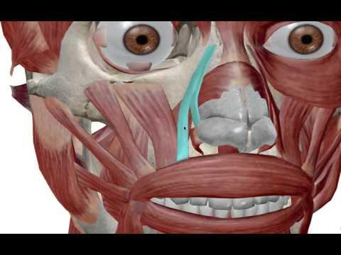 Les exercices pour les muscles de lépine dorsale dosteokhondroza vidéo