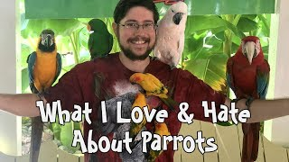 3 Things I Love & Hate About Parrots