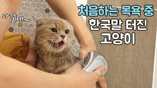 태어나서 처음하는 목욕 중 한국말 터진 고양이 이즈