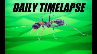 Daily Timelapse MYRMECIA NIGROCINCTA | Short Timelapse Presented By Ant Co