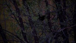 preview picture of video 'Britannia Park'