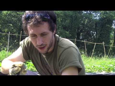 Ochagovost naturale di helminths