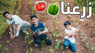 زرعنا خضروات في المزرعة🥒🌶