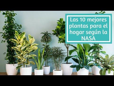 10 Plantas Para Purificar Aire Según La Nasa