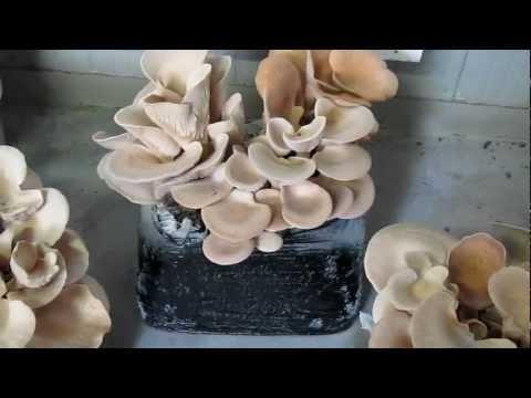 Unguenti da un fungo su risposte di mani