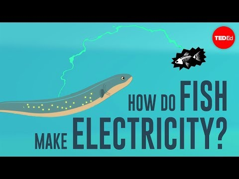 How do fish make electricity? – Eleanor Nelsen