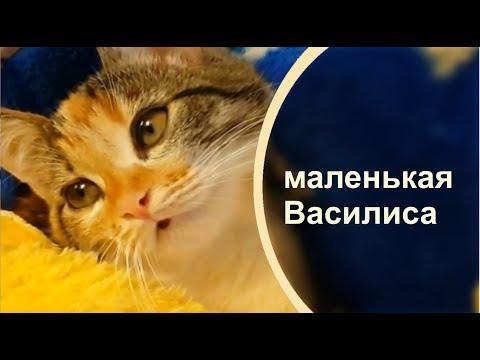 Котенок мнет лапами