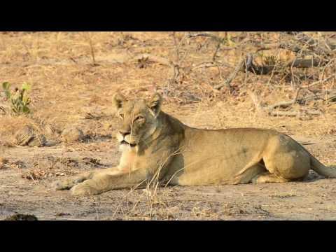 A short video showcasing Kaingu Lodge