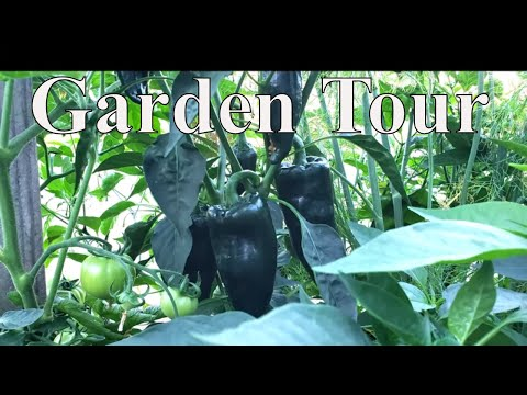 Garden Harvest For Canning With Linda's Pantry