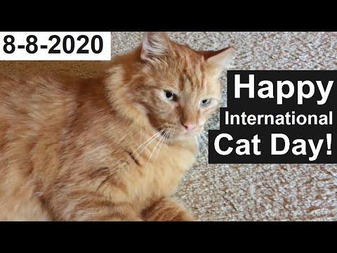 Happy International Cat Day! – 2020