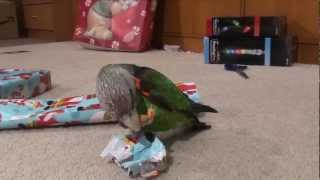 Parrots Help Wrap Christmas Presents