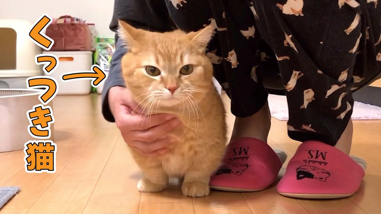 いつまでも飼い主にくっついてくる短足猫が可愛すぎて二人三脚しちゃった!