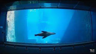 Seals – Taronga Zoo Sydney