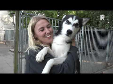Siberische husky-honden uit Numansdorp zijn wereldkampioenen én happy!