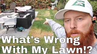 DIY how to fix thin lawn, clover, spurge, sod not taking.  What's wrong with my lawn