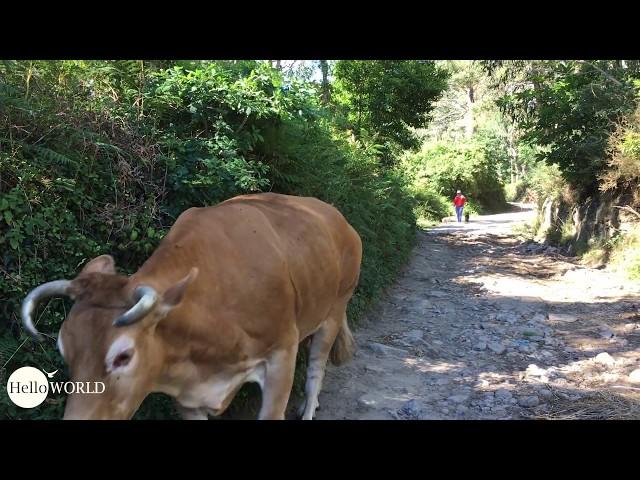 Tierische Begegnung auf dem Jakobsweg hinter Lires