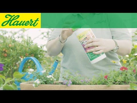 Lust aufs Gärtnern? So pflegen Sie Ihre Pflanzen mit Flüssigdünger