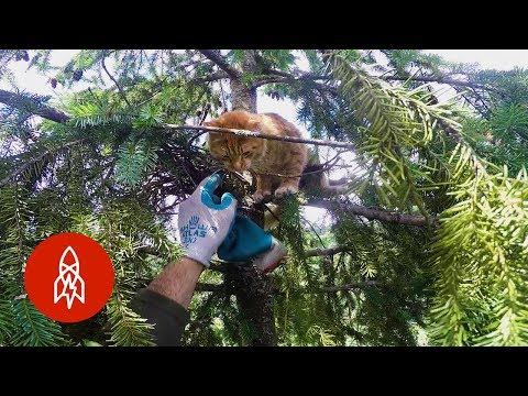 Canopy Cat Rescues & How To Put On A Jumper Without Disturbing Your Cat | mgpcpastoru0027s blog