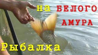 Ловля амура на реке амур