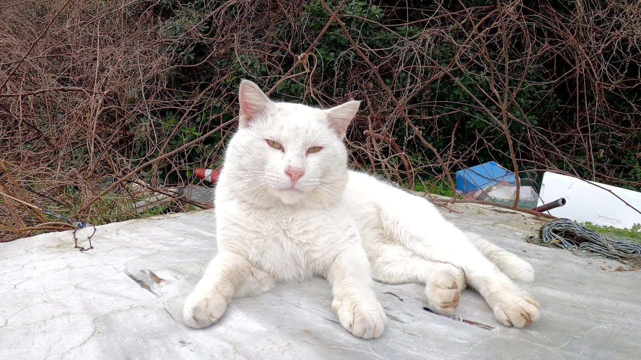 不法投棄されたゴミの中で生活する猫達 #猫 #cat #野良猫 #不法 #投棄 #ゴミ #生活