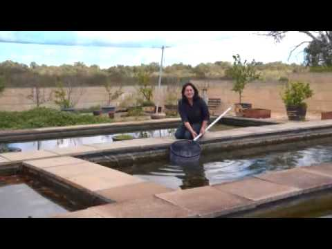 Fish for your backyard