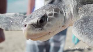 """Stranding On A Sandbar"" and saving Sea Turtles"