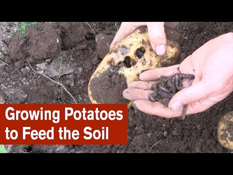 , title : 'Growing Potatoes to Feed the Soil