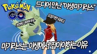 애버라스  - (포켓몬스터) - [포켓몬GO]야생 마기라스는 스킬과 개체값이 완벽하다? 제가 직접 잡아봤습니다.[포켓몬고][Pokémon Go]