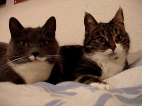 Rozmawiające koty