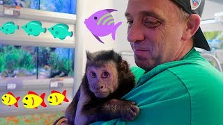 Monkey PetSmart Fish Shopping! (FAN ENCOUNTER)