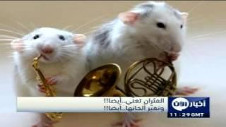 تحميل اغاني الفئران تغنّي..أيضا!! وتغيّر ألحانها..أيضا!! MP3