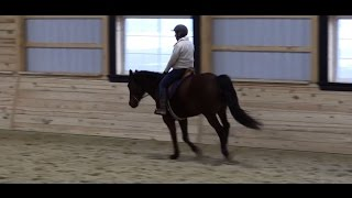 Three Tips to Improving Canter Transitions