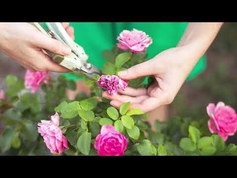 Календарь комнатных растений на август: благоприятные и неудачные дни для ухода за цветами