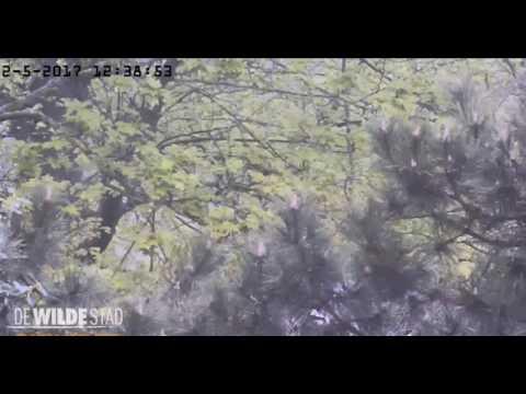 A New Nest - 02.05.17