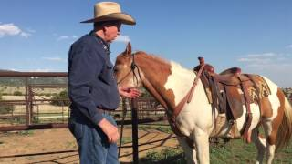 Tack Tip: Fitting a Pulling Style Breast Collar