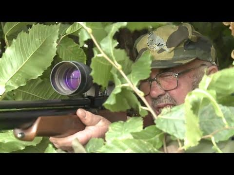 Fieldsports Britain – Hunting pigeons with airguns and the history of pheasant shooting