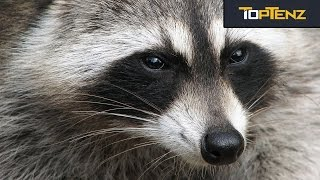 10 Animal Species That Would Take Over if Humans Died Out