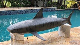 """How I built """"Rajah"""" the leading lady of Shark Whisperer"""