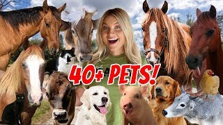 FEEDING ALL MY PETS AT THE NEW FARM! 40+ PETS ROUTINE