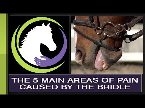 Overcoming the 5 Main Areas of Pain Caused by the Bridle