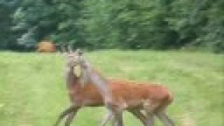Jolly Deer