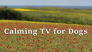TV for Dogs : Beautiful Calming Videos for Dogs - Calm Your Dog with  Wildflowers and Birdsong