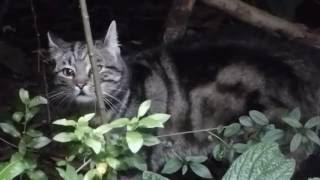 Katze Mimi – Katzenduett by night
