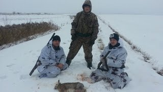 Охота на зайца и не только  23.01.2017 / Hunting the Hare!!!